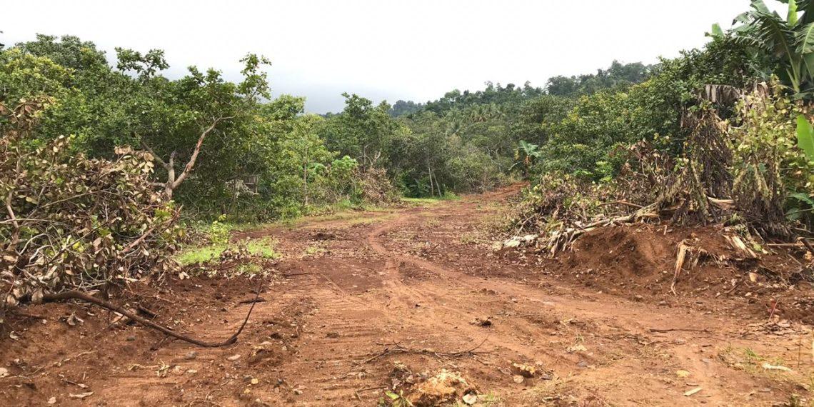 Kebun warga wawonii yang diserobot oleh perusahaan tambang. Hingga hari ini aktivitas penyerobotan lahan masih terus terjadi. (Foto Egi)