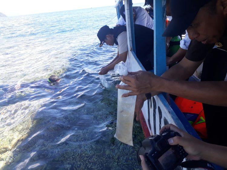 Kepolisian Daerah Sulawesi Tenggara, kembali menggagalkan penyelundupan benih lobster, setelah beberapa bulan lalu juga melakukan hal yang sama. (Foto Egi)